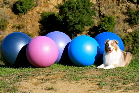 Large Exercise Balls For Dogs